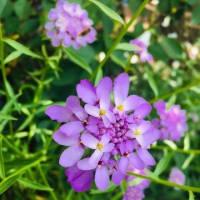 休憩時間の散歩 夏の花にバトンタッチ(⋈◍>◡<◍)。✧♡