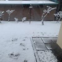 冬来りなば春遠からじo(^_-)O