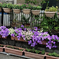 春の園芸の準備