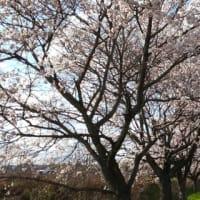春RUN2  ~ RUNNETからの刺激