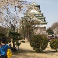 大阪城の桜も満開