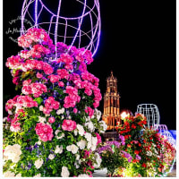 ハウステンボス バラ祭り ナイトローズ