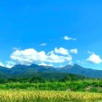 深緑のロータスと八ヶ岳追いかけコーヒーを配達する。