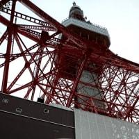 東京タワーに乾杯✨🍻🎶(台湾祭)