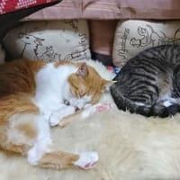 7月6日(月) ~猫の麦とごまの日常日記~