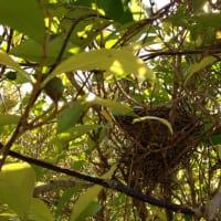 庭で小鳥の巣