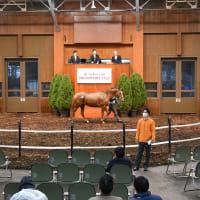【ノーザンファーム繁殖牝馬セール2021(Northern Farm Broodmare Sale)】~結果概要(最高額馬写真・動画、インタビュー映像など)