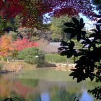 浄瑠璃寺の池と紅葉