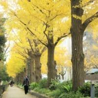 スケッチ散歩~横浜みなとみらい