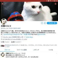 【メモ】白猫ミルコTwitter 2.2万フォロワー