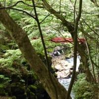 鮮やかな緑に包まれた吾妻渓谷で発見♪(^_^)