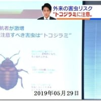 『トコジラミ』の駆除依頼が急増 2019年05月