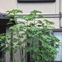 庭の花 (No 2301)