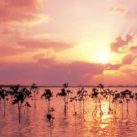 地球神信仰と地球人への教え - 古山隆夫 2020/04/21
