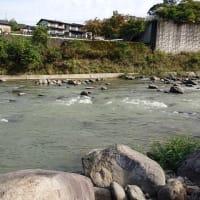 狩野川鮎、水温低下と濁水で撤収