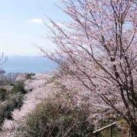 花見のお勧めは、海が見える大平山(下蒲刈町)