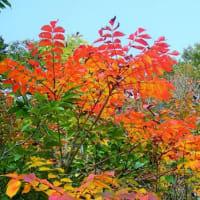 20-10.14blg:魚沼スカイラインの紅葉その二