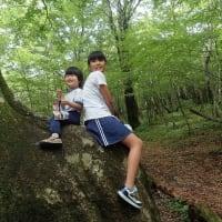 富士山麓:大ブナ:キリンの木の上で