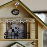 会社の看板犬だったアッシュちゃんのお家が完成しました