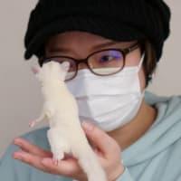 プラチナモザイクくんお迎え( *´艸`)