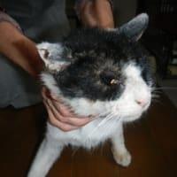 飼主のいない猫さんの去勢手術