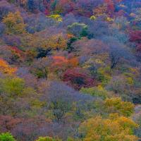 秋のスナップ写真集