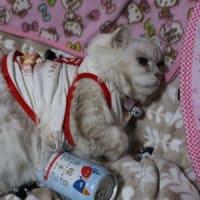 水曜日のネコ