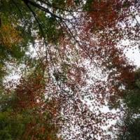 佐敷城跡の紅葉
