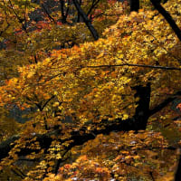鶏足寺の紅葉 その6