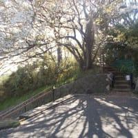 コロナに負けずに鎌倉を歩く;深沢・夫婦池公園・鎌倉山・広町緑地周遊(1)