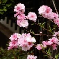 庭の様子 4月 ②
