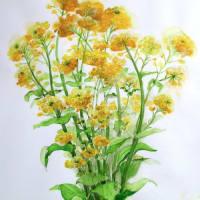 菜の花   (ヨシコ)
