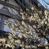立春に初詣
