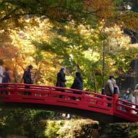小國神社の紅葉風景