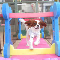 春に向けて新しい遊具で楽しく遊ぼう♪  犬のしつけ教室@アロハドギー