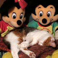 ネコちゃんのロフト