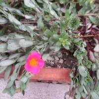 午前中の出会い:ヒト&花
