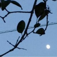 小次郎の生活ー栗名月(十三夜)ー