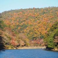 本日嵐山の紅葉なごり
