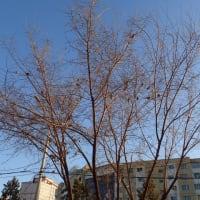 雀も落葉樹のにぎわい