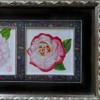 3種類のバラ