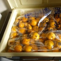 おばさんの料理教室 渋柿からのジャムの作り方
