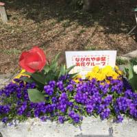 3/28 チューリップがさらに咲きました(^^)/