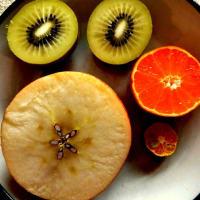 果実と種~植物のかたちとエーテル観察講座
