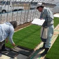 優良種子の生産に向けて,まずは育苗管理から!