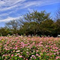 秋の日の公園~