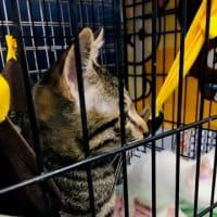 猫の譲渡会🐈 こだいらショッピングセンター