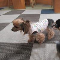 20/03/27 犬の幼稚園BuddyDog