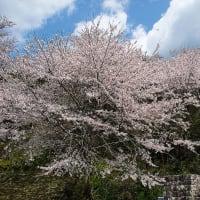 4/2 やっと晴れた熊野(熊野市神川町〜紀和町)