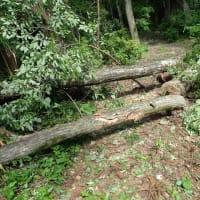 薪伐採の顛末記